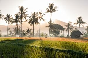 Bali - Indonesië